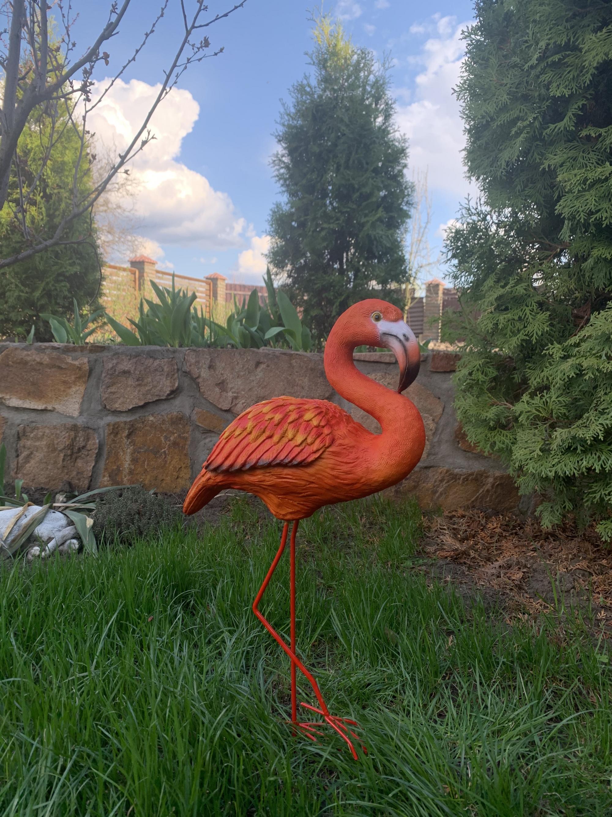 Фламинго стоячий - 2