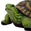 Черепаха (М) - 1